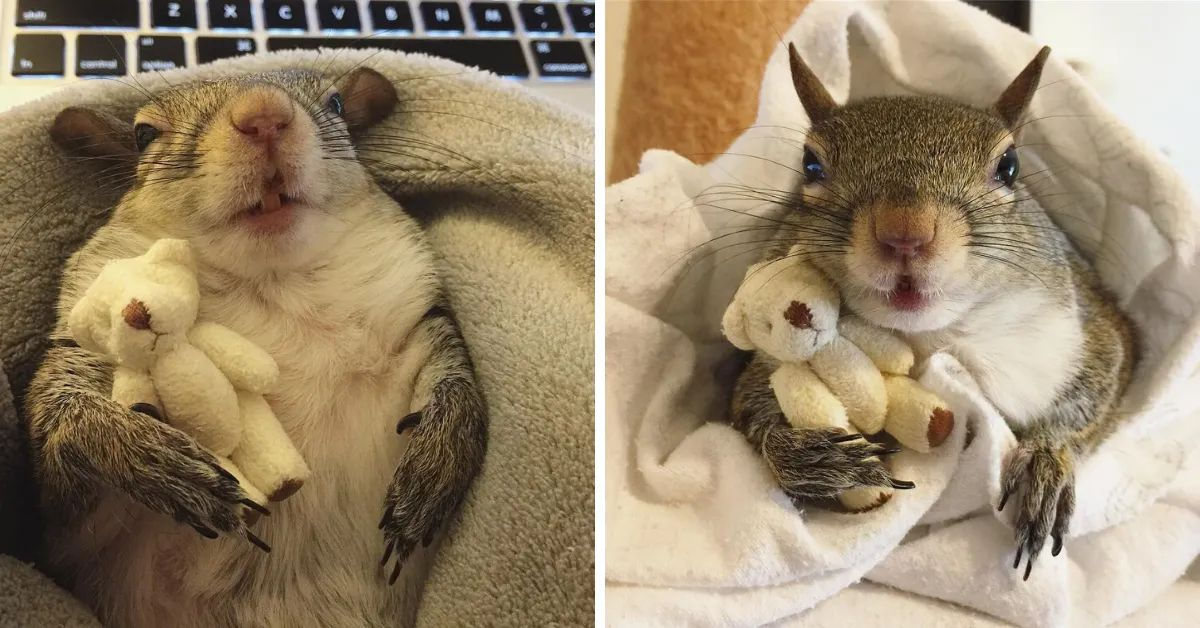 Rescued Squirrel Named Jill Still Can't Sleep Without Her Teddy Bear
