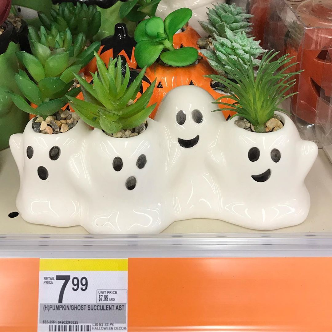 Walgreens Is Selling The Cutest Ghost And Pumpkin Faux Succulent Planters For Halloween