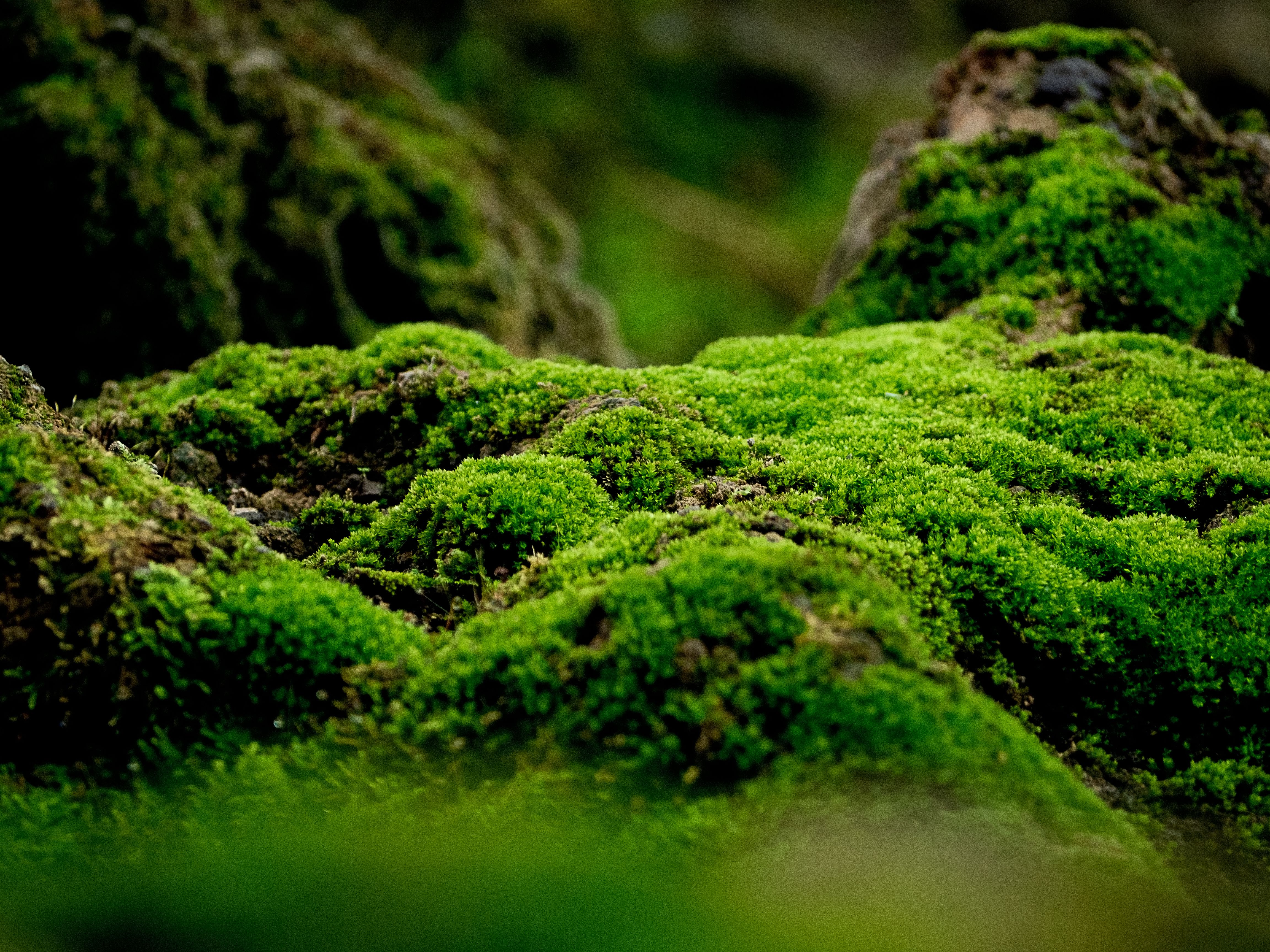 Moss in a forest