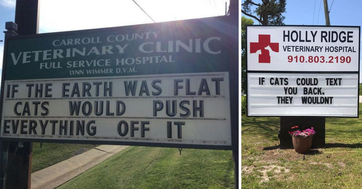 14+ Of The Best Cat Jokes Put Up On Vet Clinic Signs
