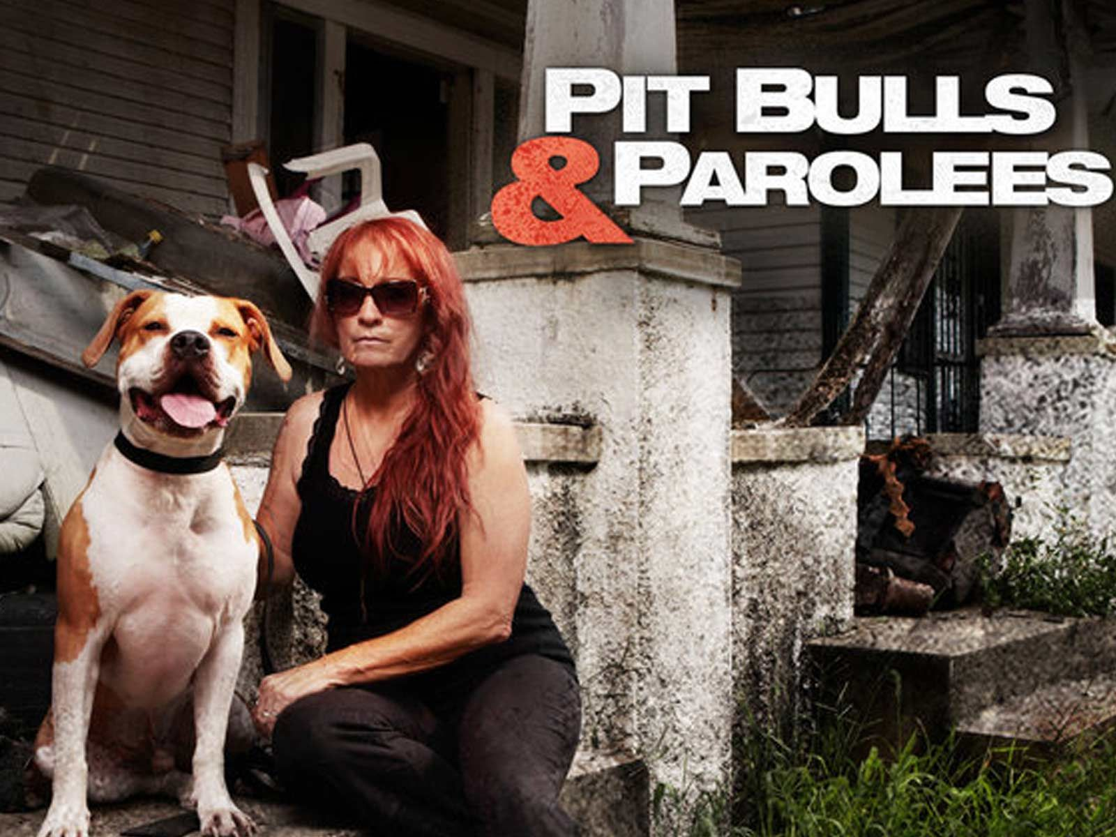 The Dog Shelter From Pit Bulls Parolees Is In Dire Need Of Help