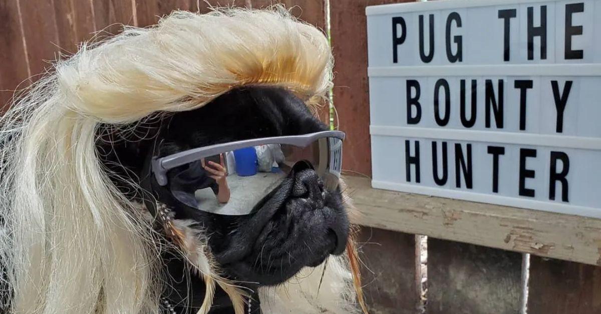 This Dog Already Won Halloween With Pug The Bounty Hunter
