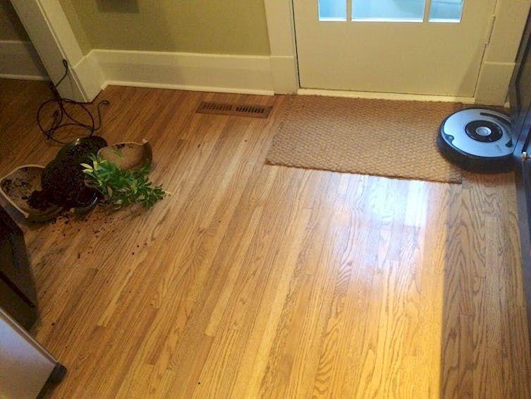 Roomba Dog Poop Reddit