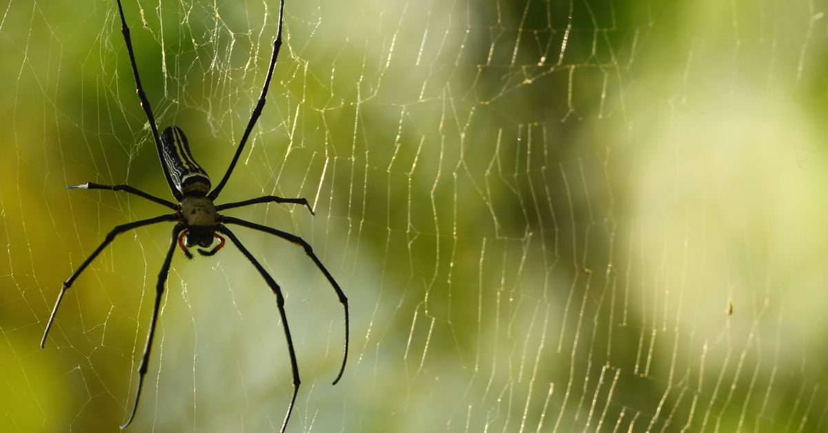 Humans Could Soon Be Able To Talk To Spiders, Experts Say