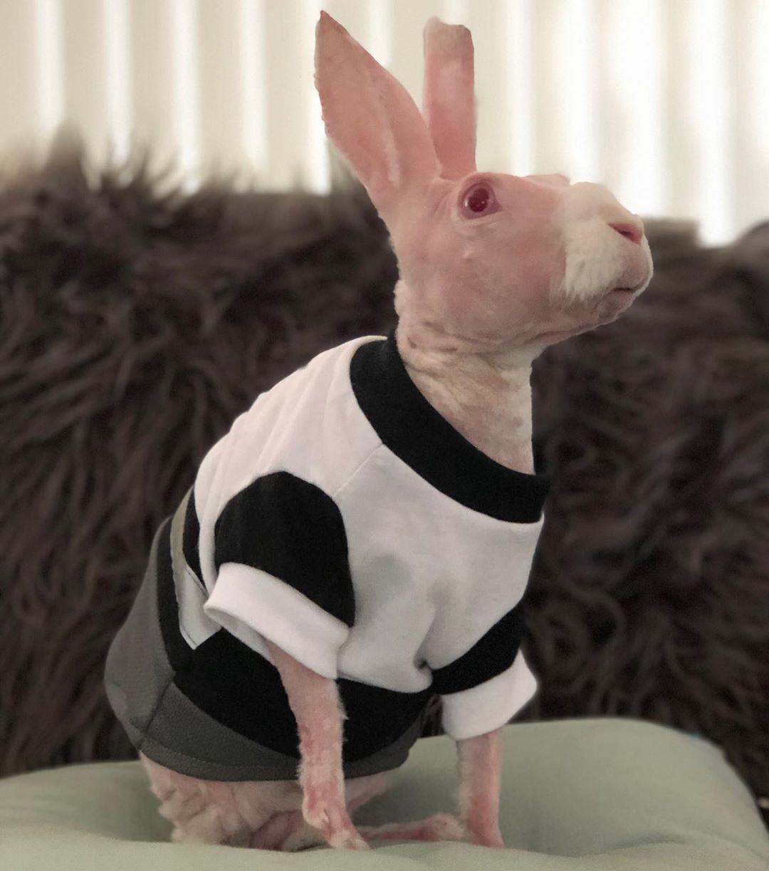 Naked rabbit