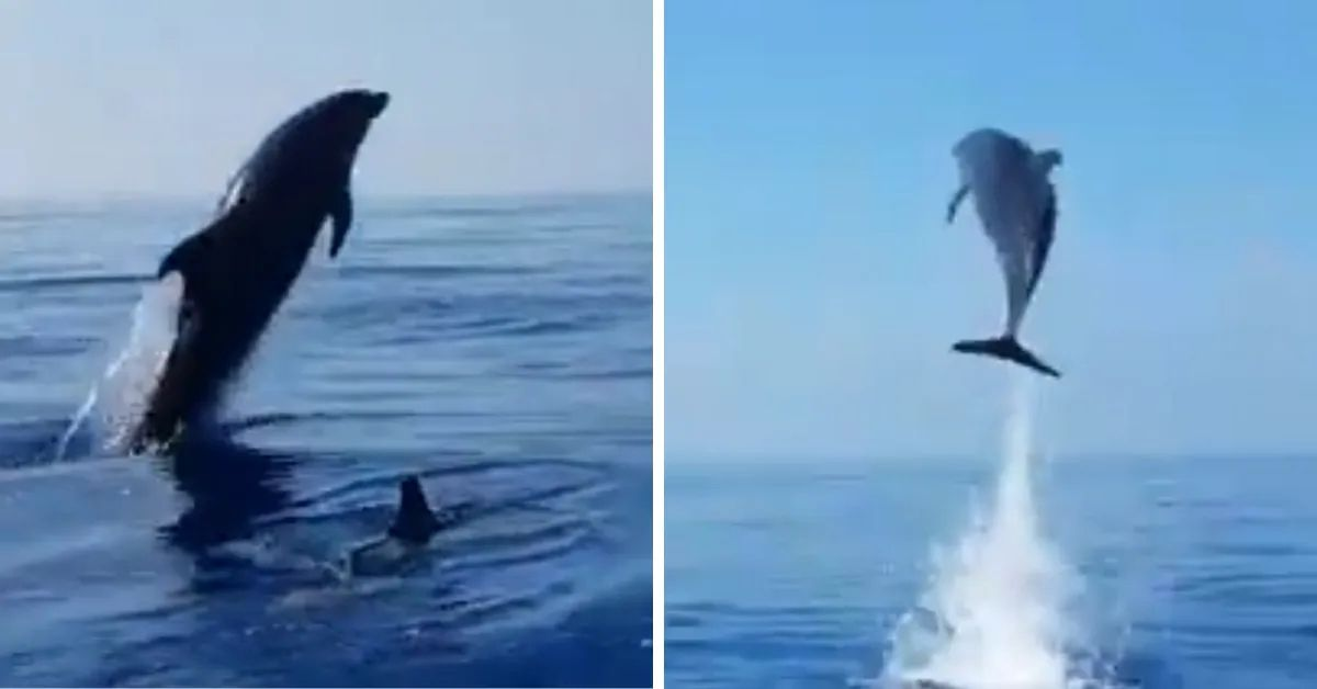 Image result for Mother Dolphin 'Jumps For Joy' As Fishermen Release Her Baby From Net