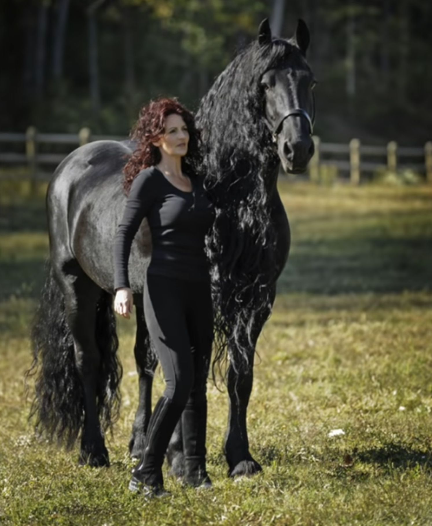 Stallion Named Frederik The Great Goes Viral As World S Most Handsome Horse