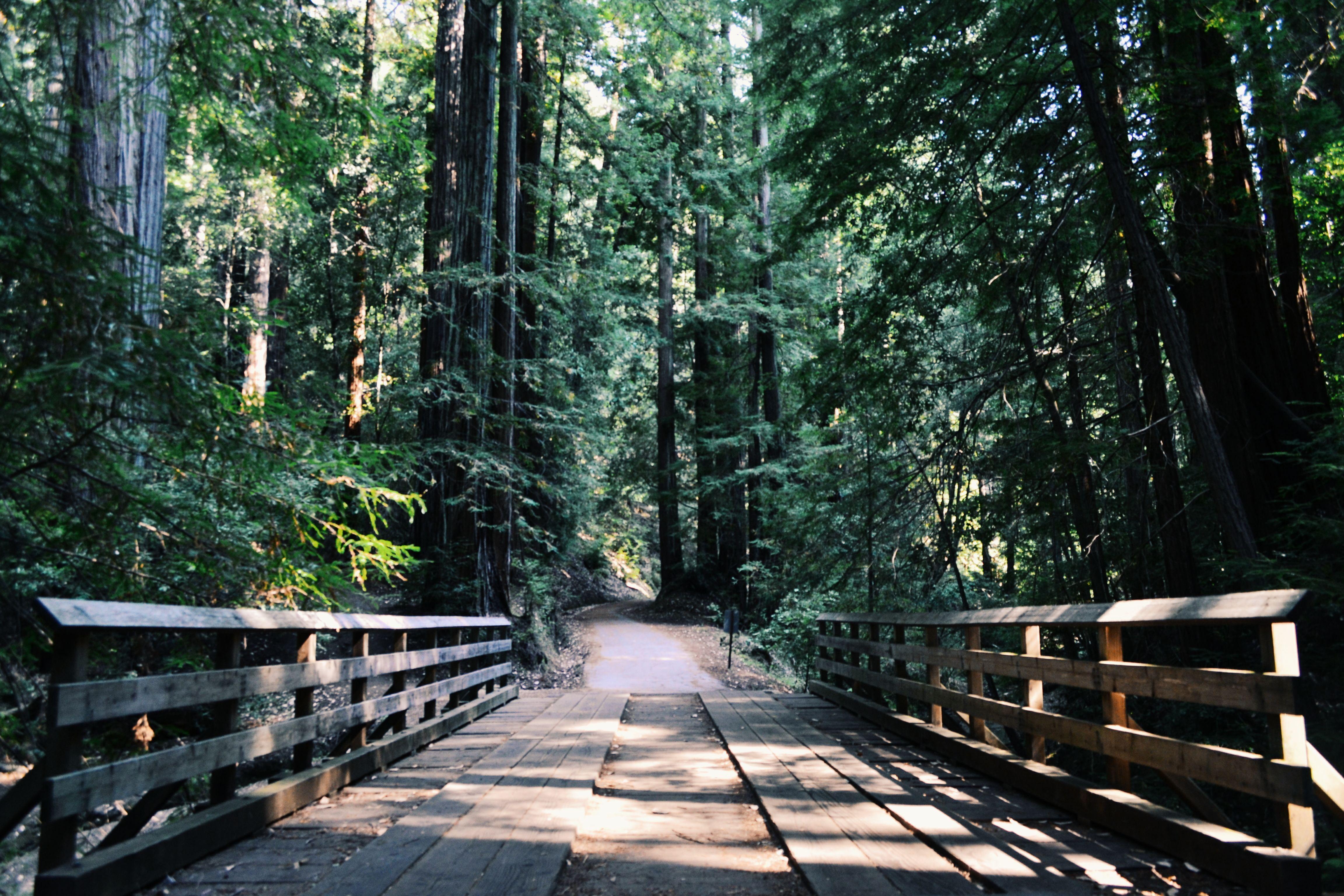 A bridge is seen among tall trees.