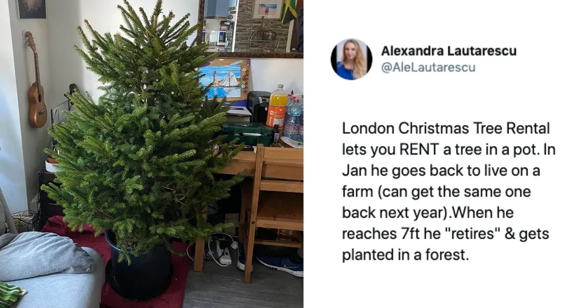 People Are Loving These Christmas Tree Rentals That Save ...